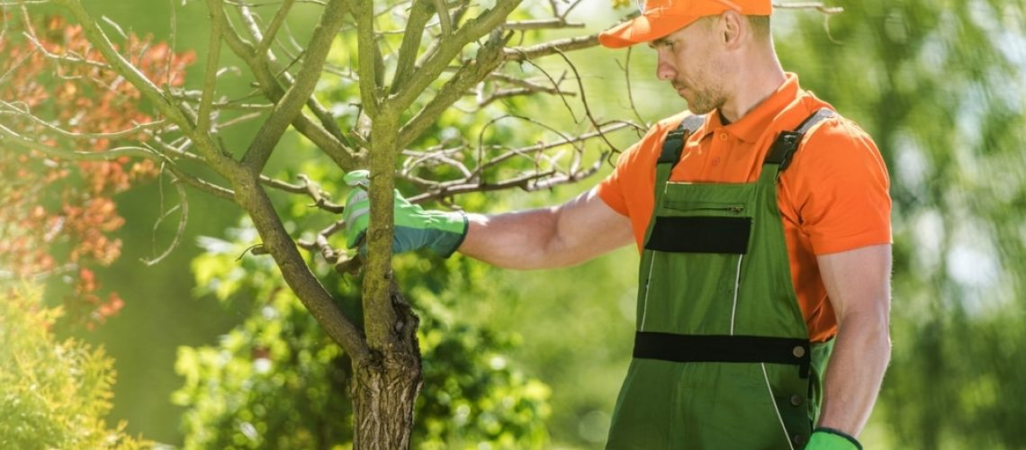 Commercial Landscaper Pruning Trees
