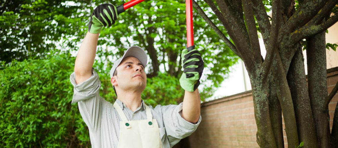 Gardener pruning a tree for landscape design