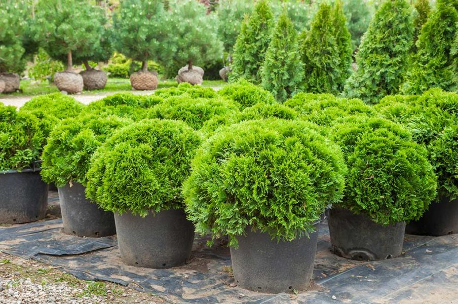 Plants From Idaho Falls Nursery Used For Landscape Design