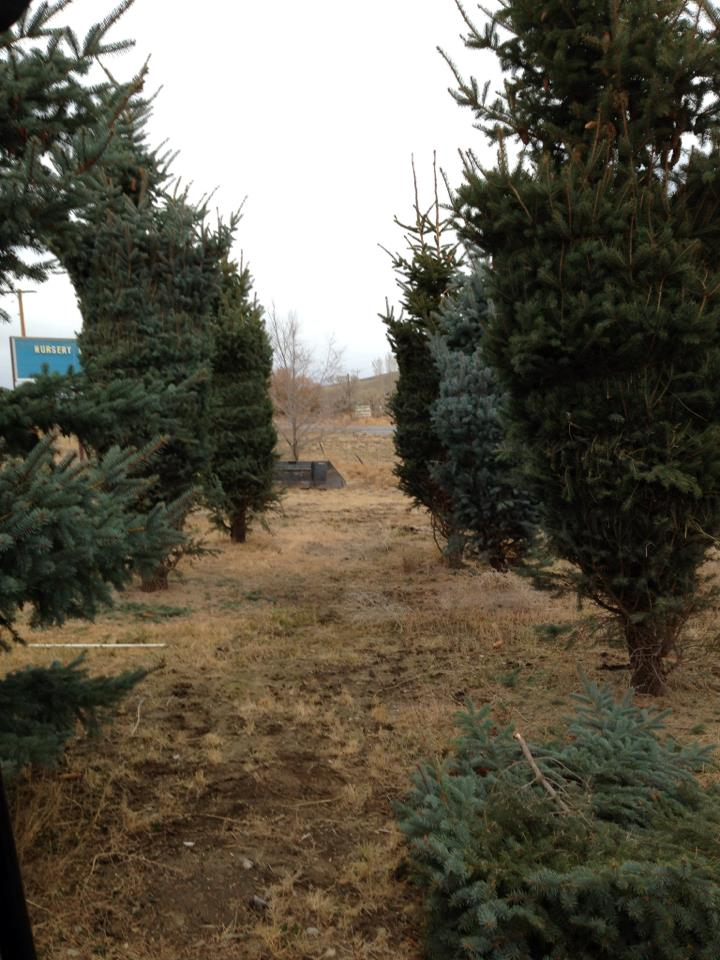 Idaho Falls tree nursery