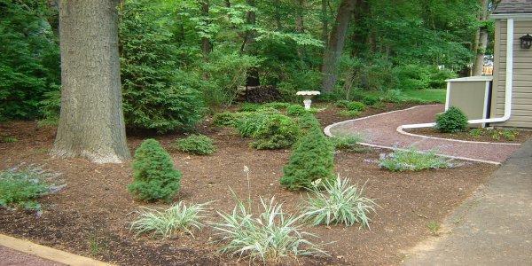 Idaho Falls tree shrub care